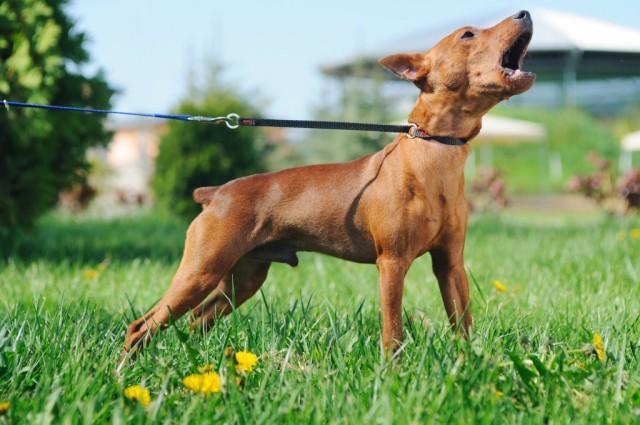 cani senza vista abbaio