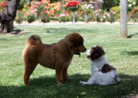 cani senza vista socializzare