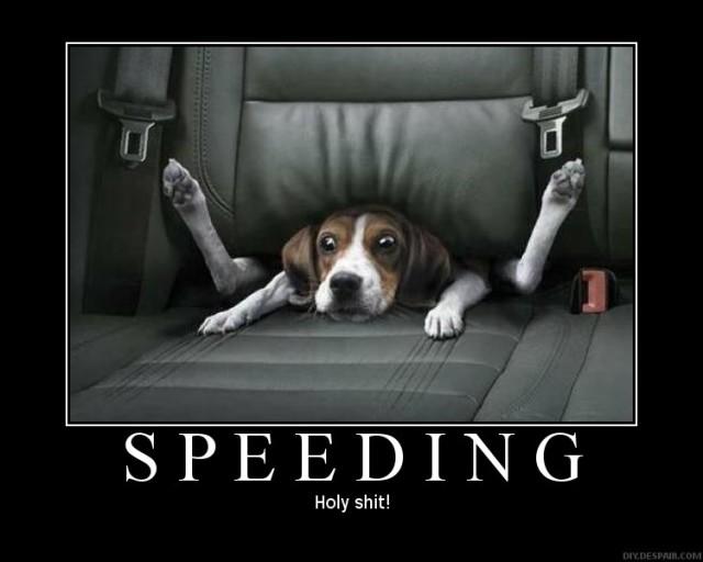cani senza vista auto